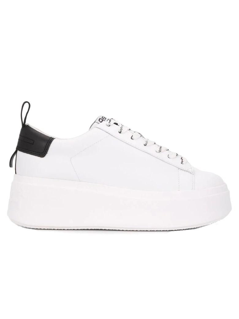 Ash White Leather Sneakers - WHITE