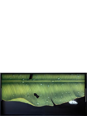 Taitù Medium Rectangular Tray- Freedom-Foglie Collection