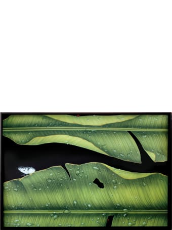 Taitù Large Rectangular Tray- Freedom-Foglie Collection