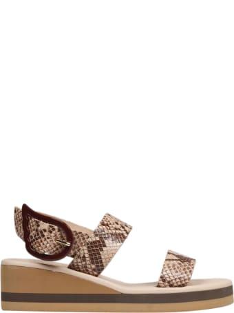 Ancient Greek Sandals Clio Rainbow Python Sandals
