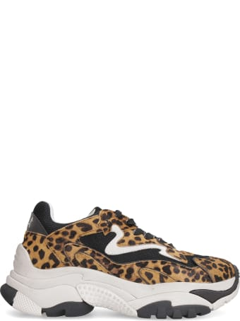Ash Addict Calfhair Sneakers