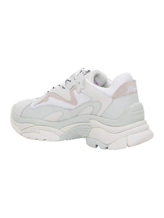 Ash Addict Sneaker