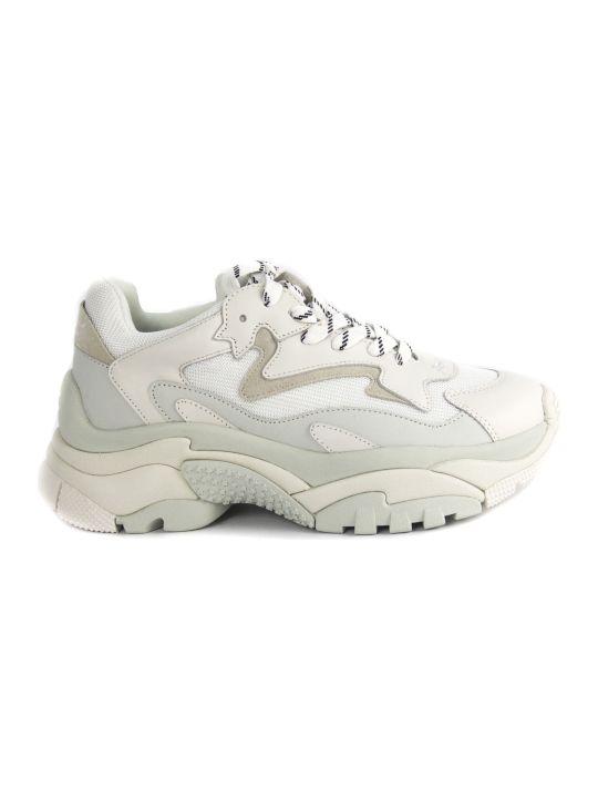 Ash Sneaker Addict In White Leather