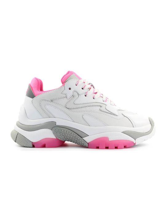 Ash White Fuchsia Addict Sneaker