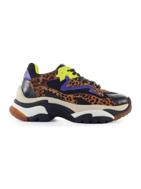 Ash Addict Multicolor Leopard Sneaker